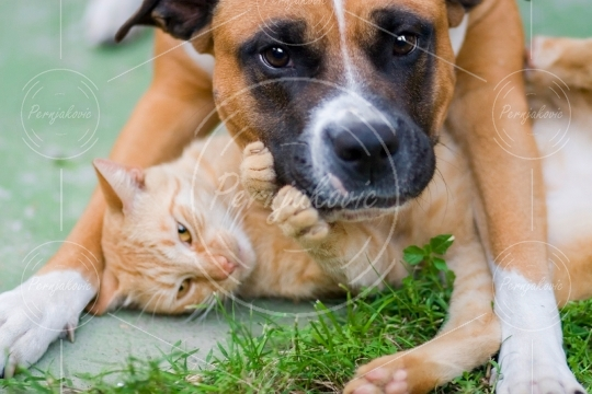 Love between cat and a dog